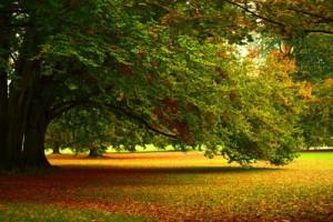 Herbstbaum Winterblues