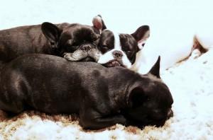 Checkliste Hundekauf Welpen
