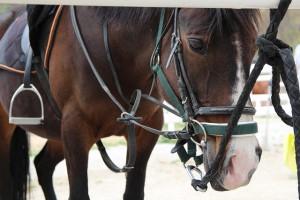 Checkliste Pferdekauf Erstausstattung