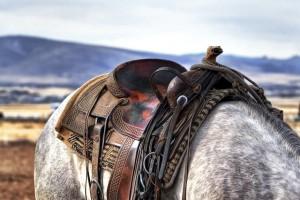 Checkliste Pferdekauf Sattel