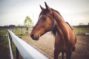 Checkliste Pferdekauf erstes eigenes Pferd